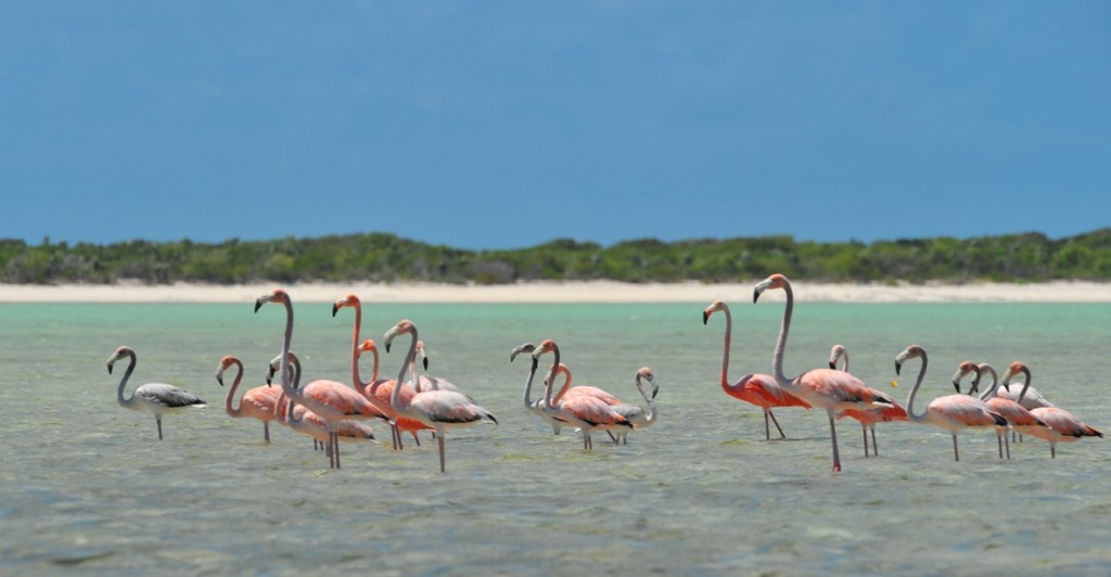 Flamingos at Blackwood Point, Pirates Well, Mayaguana - © Bahamas Ministry of Tourism